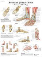 """Poster """"Foot and joints"""""""